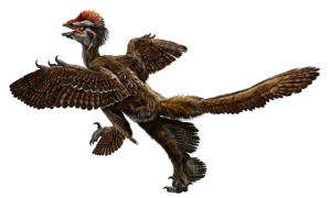 090930_anchiornis